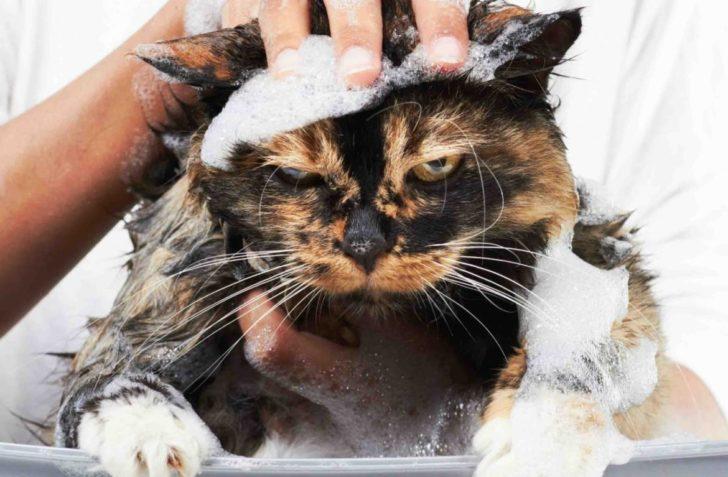 История уже чистого кота Кузи и его запаса на черный день