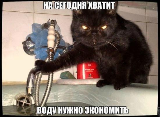 СМЕШНОЙ КОТоПОСТ НА ПЯТНИЦУ.ЭДВАЙСЫ -50 .(про котов)