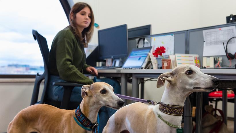 Pet‑friendly офисы: как ходить на работу с собакой