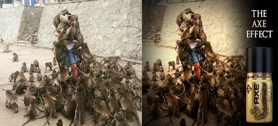 Роковая ошибка: турист решил покормить обезьян и стал героем интернет-мемов