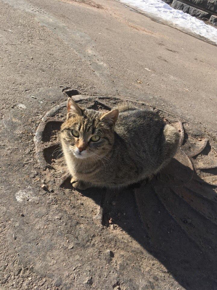 Кошка с мудрым взглядом очень радуется вниманию людей.