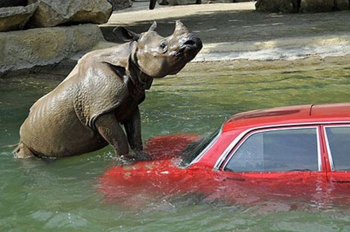 Автомобили и животные: стоп-кадр