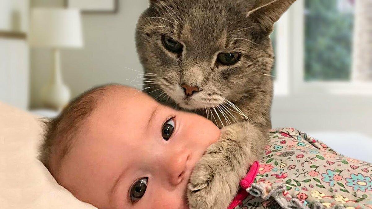 Как кошка подарила мне ребенка истории из жизни