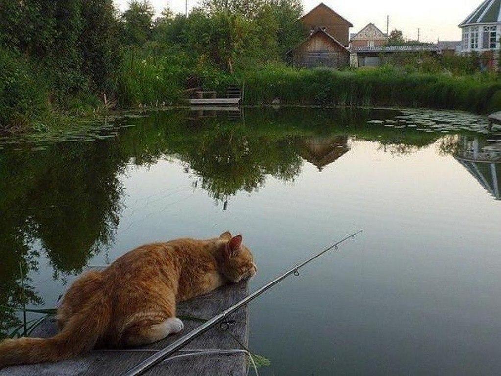 кот и рыбалка картинки для устройство надежно надо