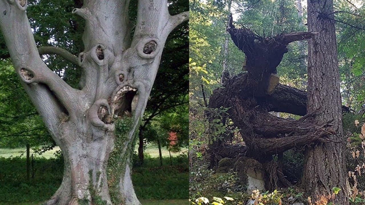 Cамые жуткие и необычные деревья на планете