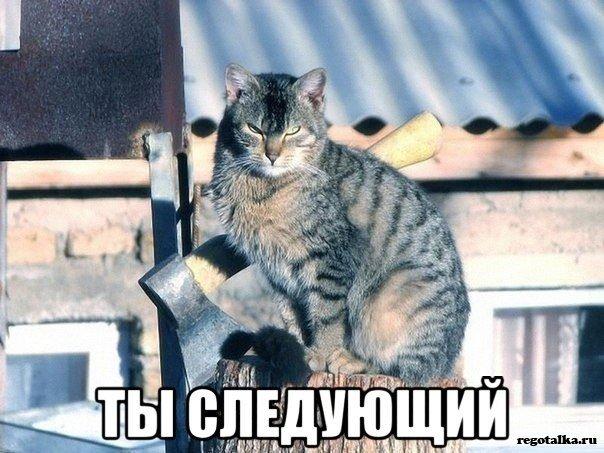 """""""Мой сосед убивает котов"""""""