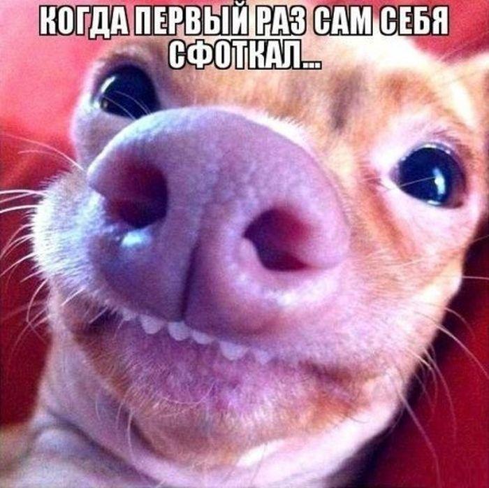 ПРИКОЛЬНЫЕ КАРТИНКИ С ВЕСЕЛЫМИ НАДПИСЯМИ.ЭДВАЙСЫ-49.