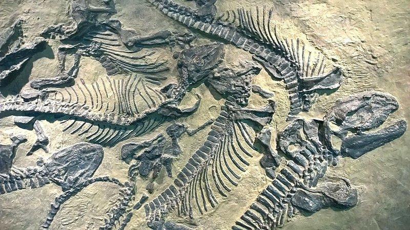 Палеонтологи подсчитали, что за всю историю Земли, окаменел только 1% от всего живого. информация, картинки, факты