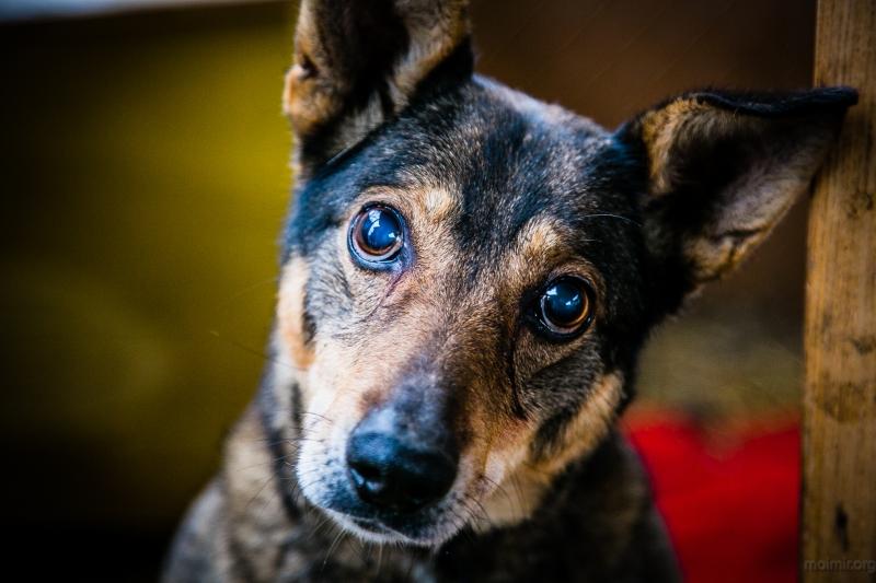 Потрясающие портреты бездомных животных. Просто загляните им в глаза!