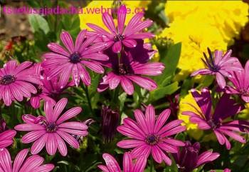 Подготовка цветов к весне