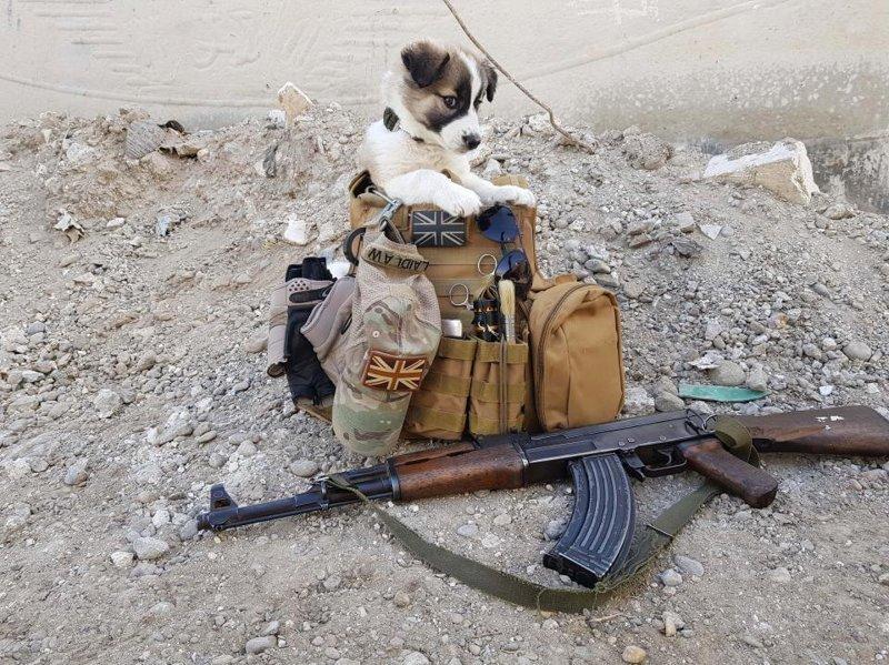 Солдат спас на войне щенка и нашёл в нём спасителя для себя животные, собака, солдат, спасение, щенок