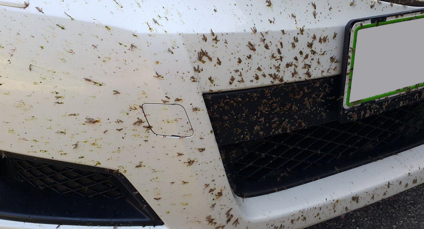 Как быстро убрать следы насекомых с лобового стекла Автомобили