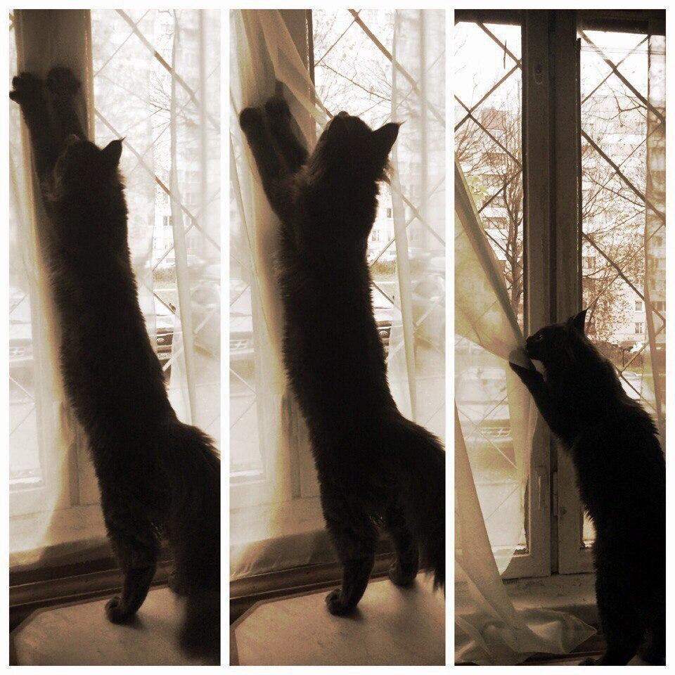 Потому что кот считает, что все эти ваши занавески - бесполезная ерунда