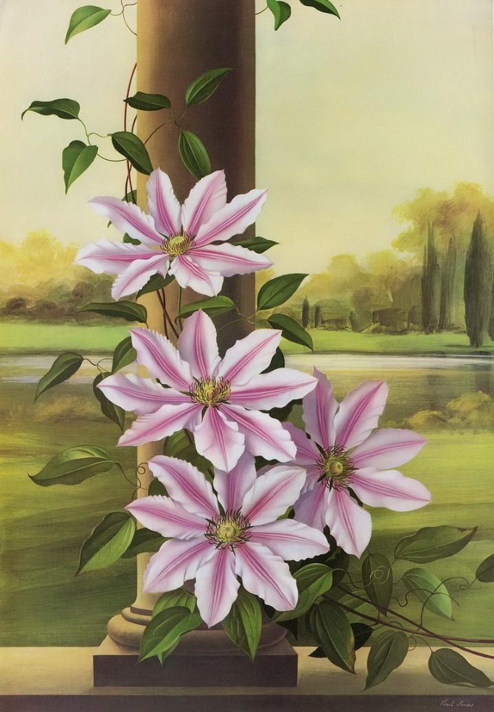 Paul Jones - акварельные рисунки цветов