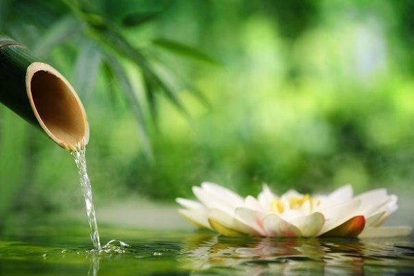 Мысли – это главный источник вашего хорошего настроения.