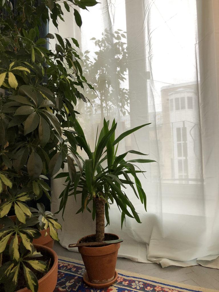 Шторы, которые очищают воздух ИКЕА,технологии,шторы