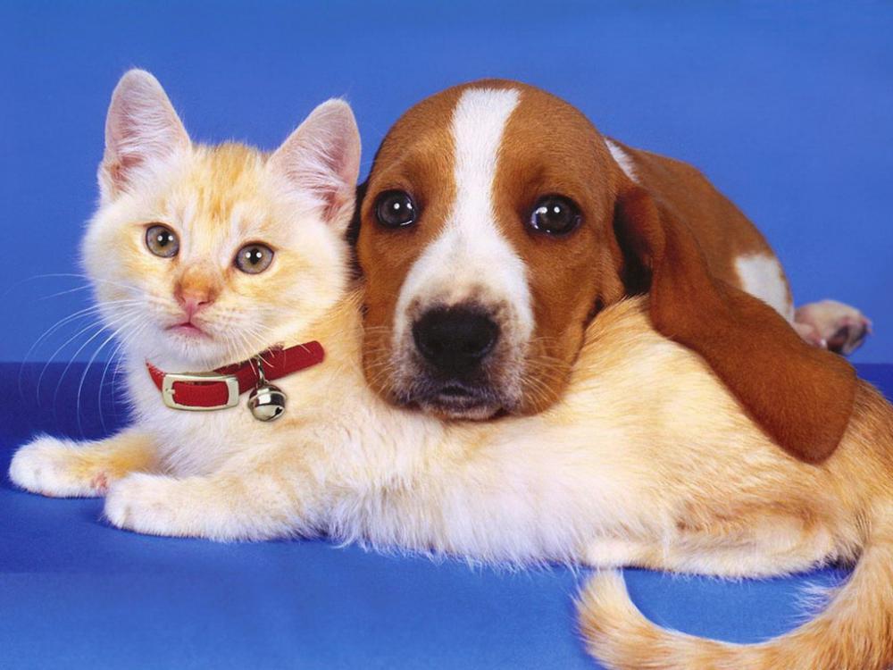 Картинки смешных собак и кошек, поздравления