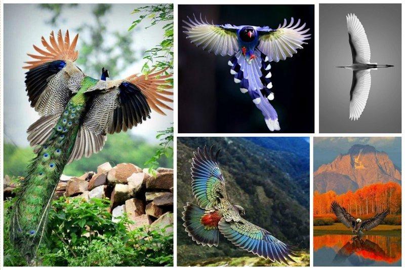 Красота птичьего полета