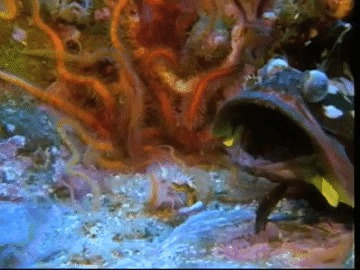 существа, море, инопланетяне, рыбы