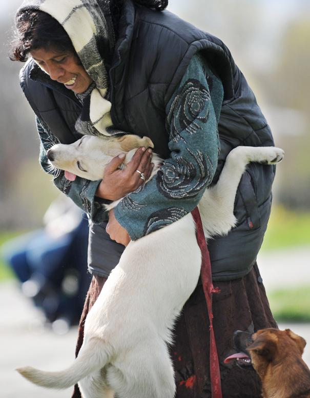 милые собаки обнимают своих хозяев (10)
