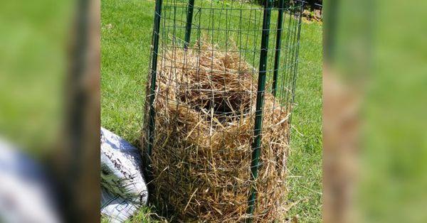 Больше не покупайте картошку. Новый метод выращивания нескончаемого запаса картошки прямо у Вас дома!