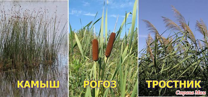 Сорняки подскажут, насколько участок пригоден для овощей огород