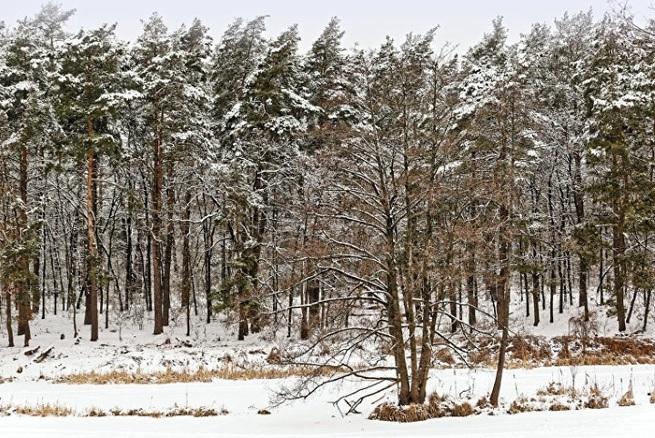 Лесной конфликт: Евросоюз по…