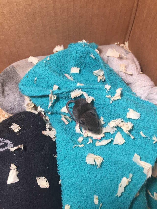 У малыша Сквикса появился домик из картонной коробки с тёплой подстилкой в мире, добро, животные, люди, мышка, спасение