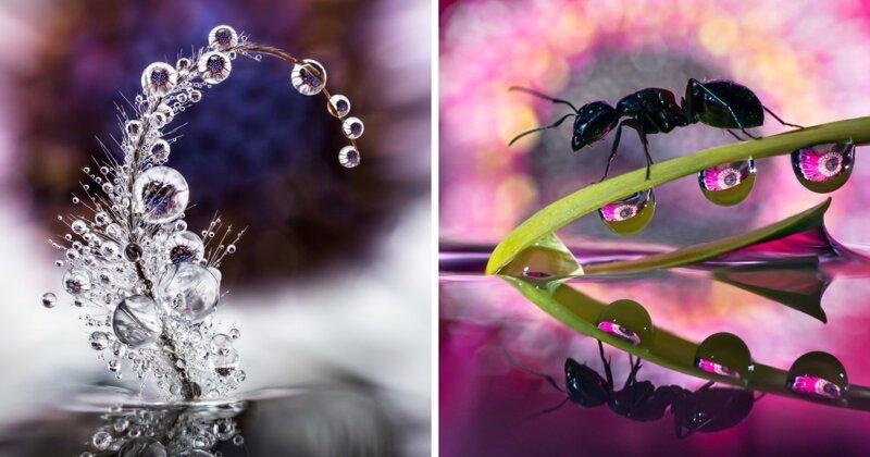 Как в капле воды: чудеса макрофотографии