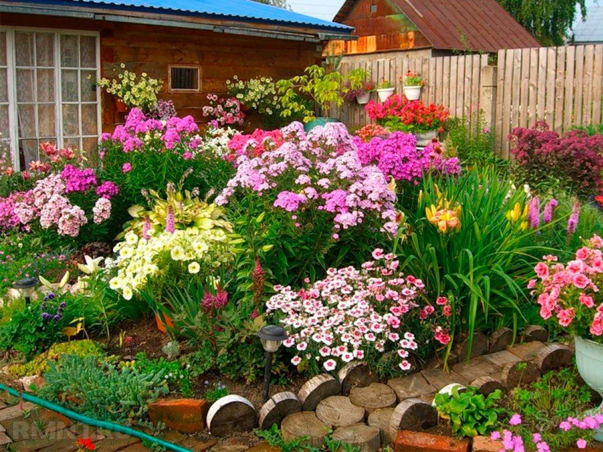 Дачные участки засеянные цветами фото