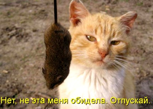 Коты и кошки шутить изволят...