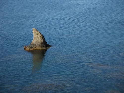 Ученые определили вид трехметровой акулы из Ливадии