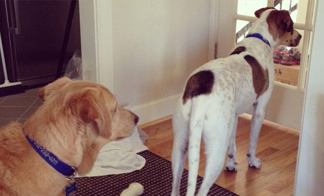 Собаки заметили невидимые человеку явления. Видео с камер, установленных в домах