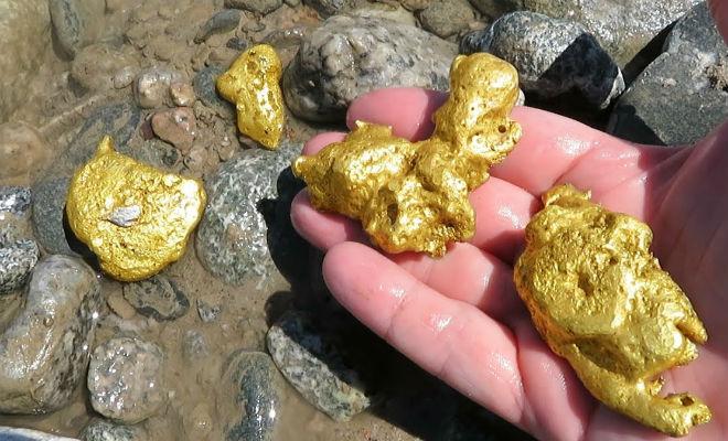 Сколько золота можно добыть за день. Намываем, считаем